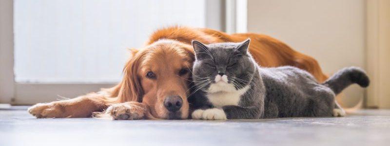 Wer große Tiere in der Wohnung halten will, könnte Probleme bekommen.